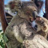 You can name this gorgeous little newborn koala