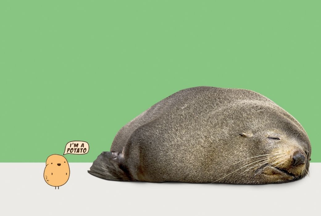 Benny the seal
